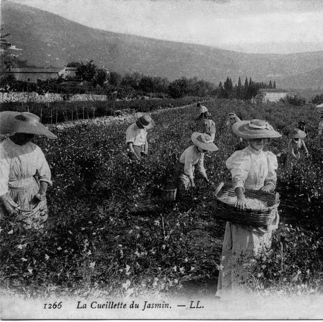 Conférence olfactive (Osmothèque) : jasmin, à la découverte de la fleur