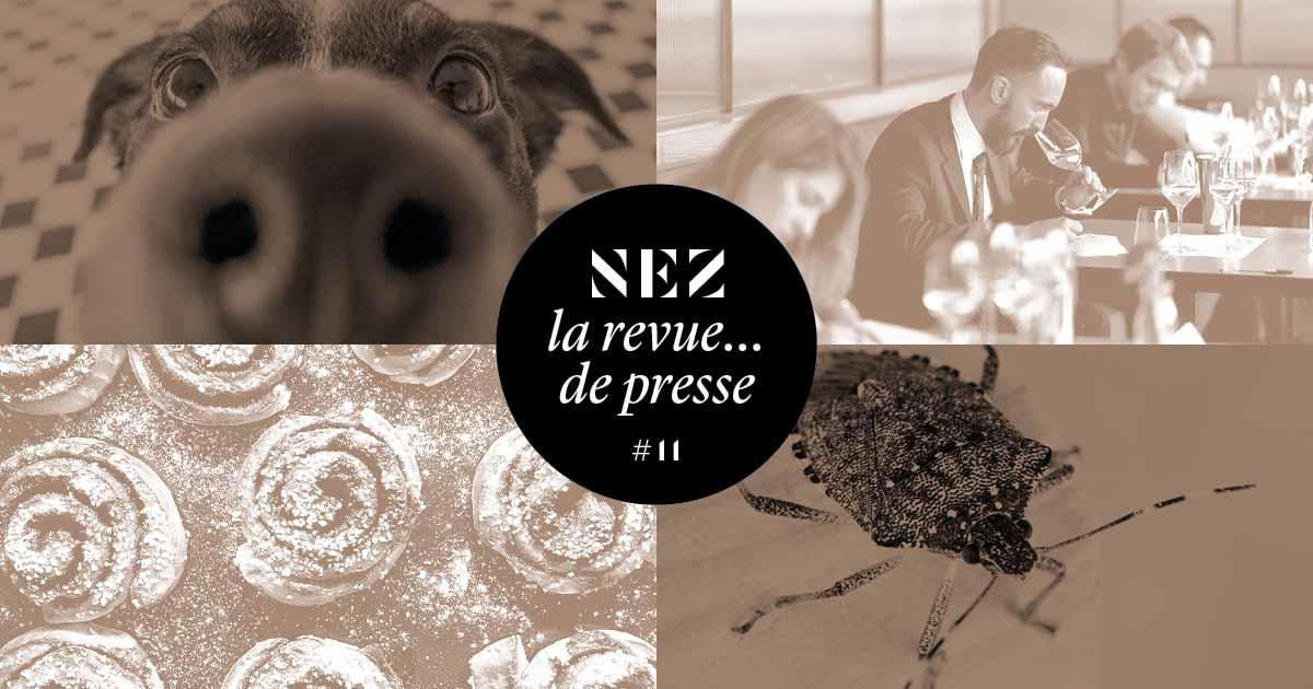 Nez, la revue… de presse – #11 – Où l'on apprend que les singes se parfument, que les punaises sentent la coriandre, et la coriandre le savon !